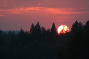 Solnedgang i skog