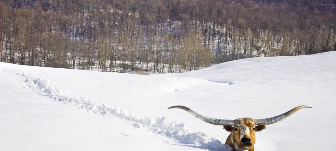 Vintergolf 3. mars og 10. mars