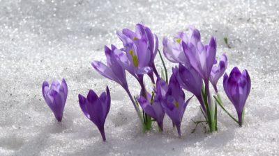Vintergolf 14. april